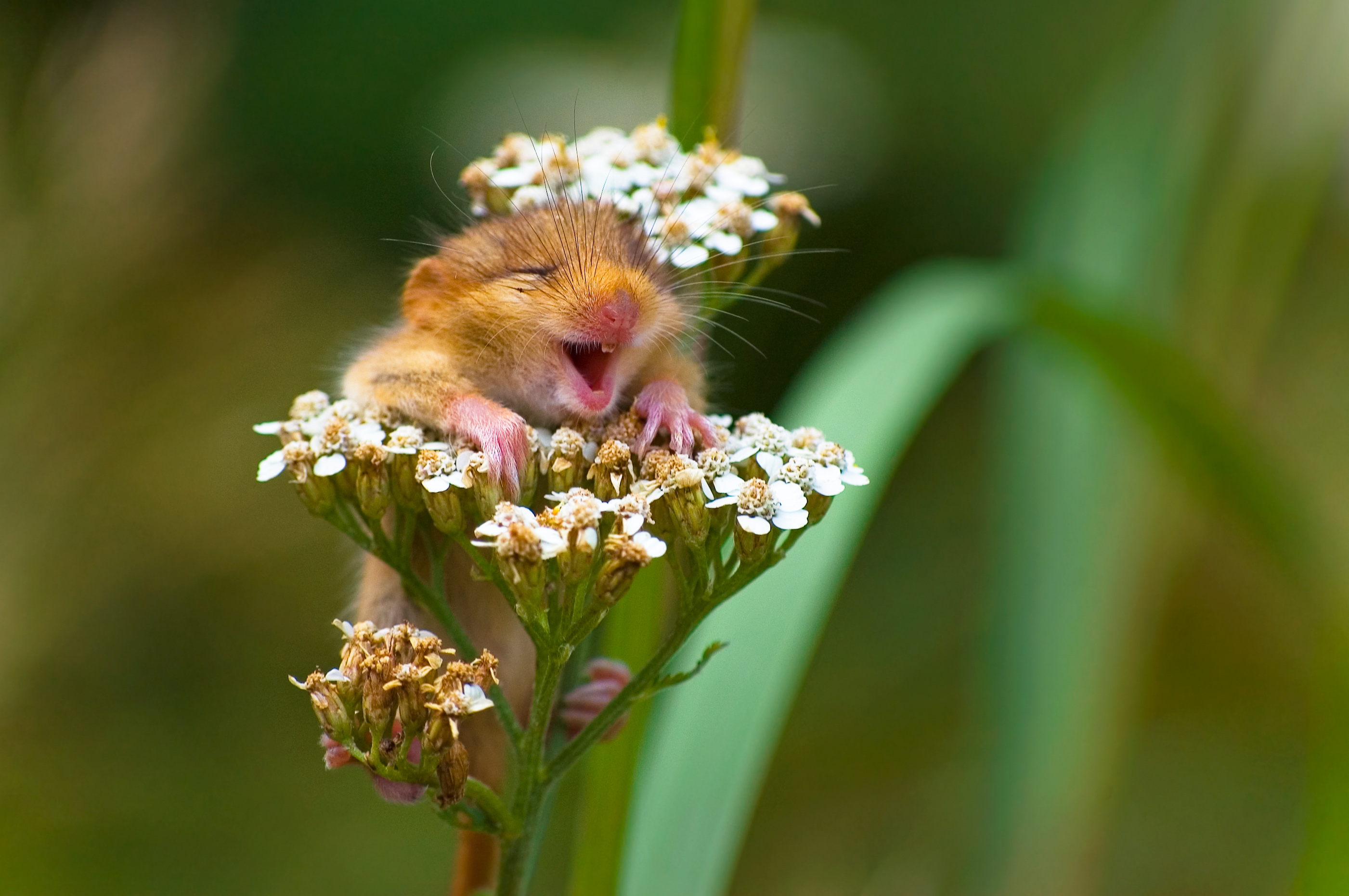 Comedy Wildlife Photography Awards features the funniest animals of the year