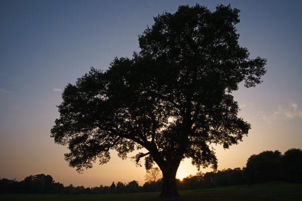 Tokina Firin 20mm f/2 tree silhouette