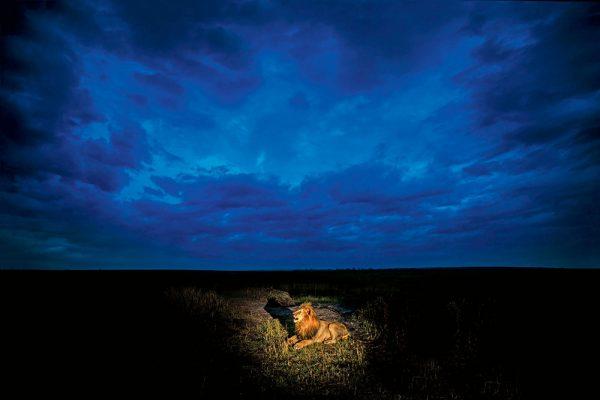 Low-light wildlife photography tips