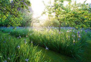 Garden photography tips
