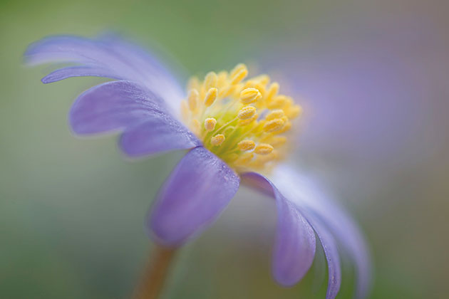 Top macro flower photography tips - Amateur Photographer