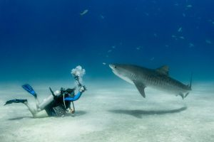 Getting up close and personal with Tiger Sharks
