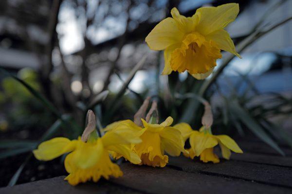 Leica Q2 sample image