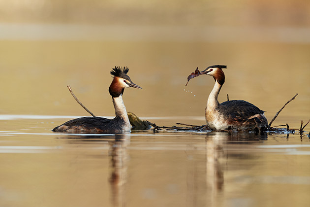 Top tip for shooting wildlife this spring - Amateur Photographer