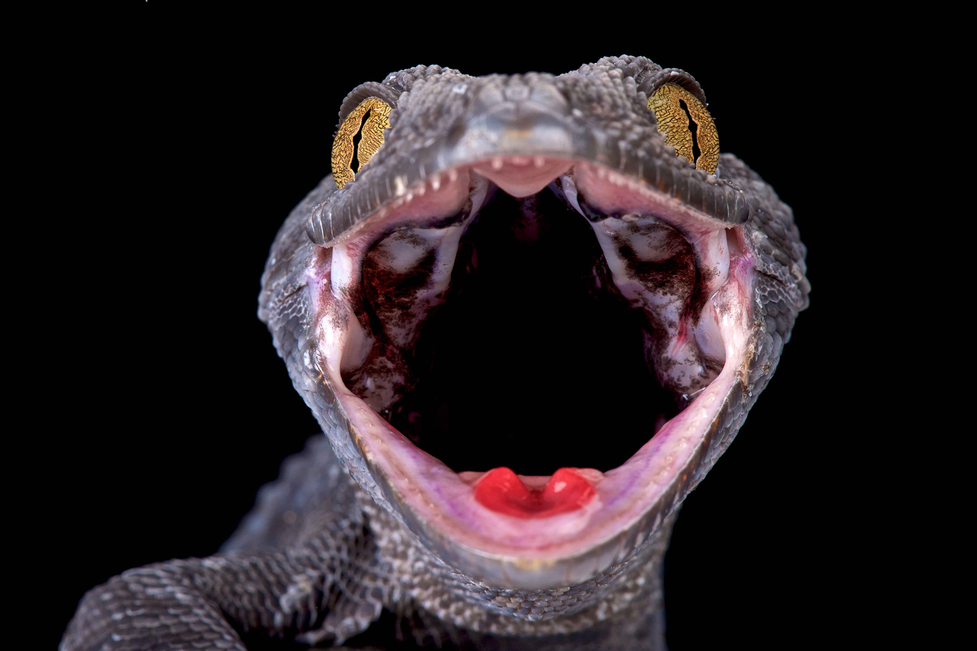 Dazzling Reptile Photographs From Stunning New Book