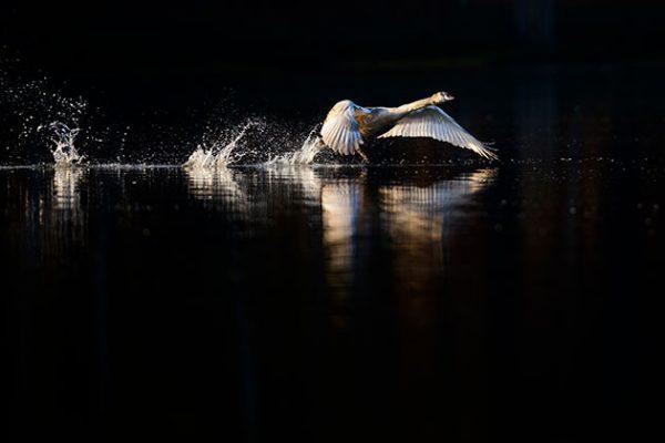 Lighting For Your Wildlife Shots