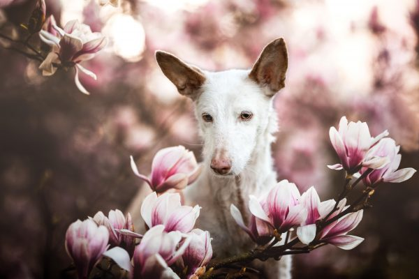 Dog photographers of the year announced