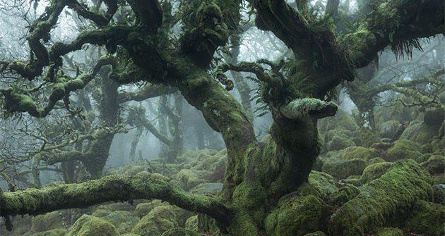 запутанные леса