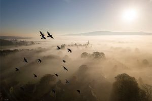 British Wildlife Photography Awards 10 Habitat winner