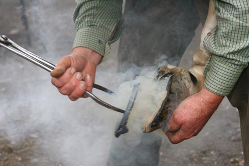 A farrier hot shoeing a horse