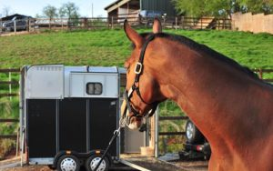 Teaching your horse to load
