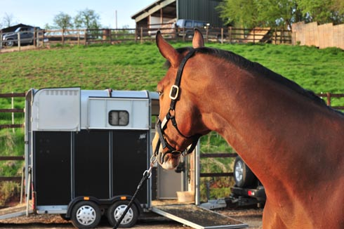 top tips on loading your horse horse hound