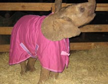 Donate Your Spare Rugs To Orphan Elephants In Zambia
