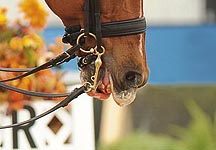 How to heal a horse's split or cracked lips - Horse & Hound