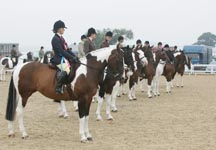 A line-up of coloured show horses