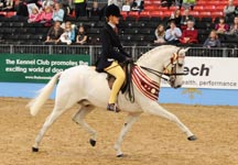 Veteran horse showing championship winner