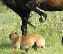 horseanddog.jpg