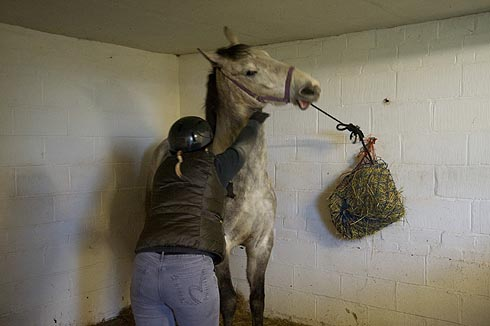 How to teach your horse to tie up safely