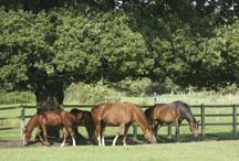 seasonal pasture myopathy