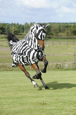 Keep away flies with a zebra print rug