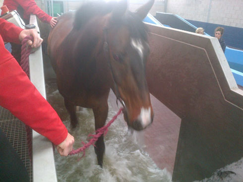 One of Lauren Shannon's horses on a water treadmill