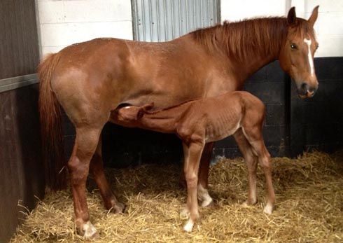 Weidyfleur, full sister to Valegro and her foal Integro (aka Mango)