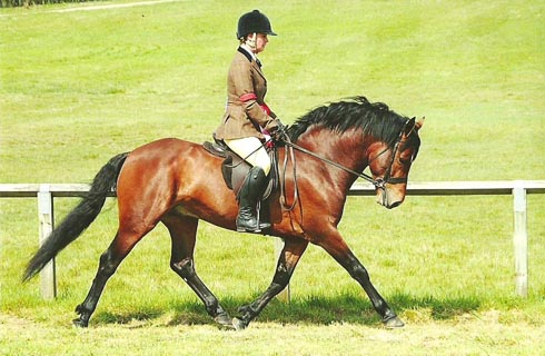Chloe Chubb riding Warwick