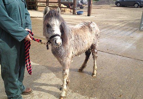 Lottie, the abandoned foal