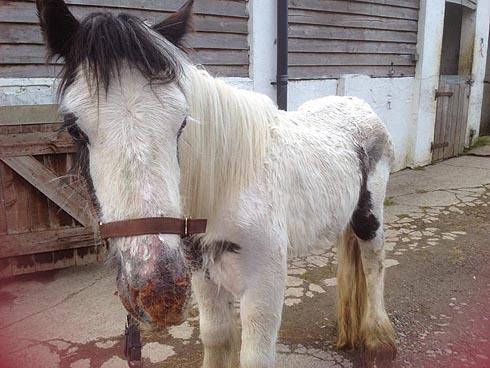 dumped pony