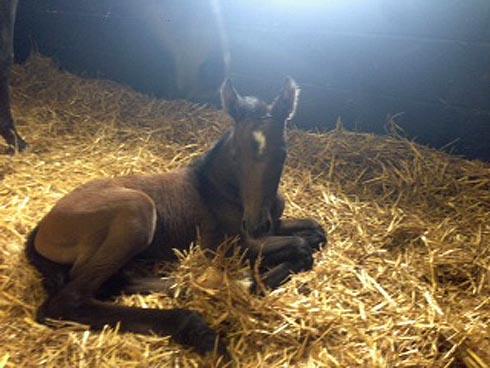 Delphi's filly foal