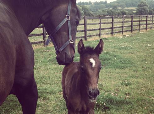 Lauren Shannon's mare Quixotic with her foal Alta