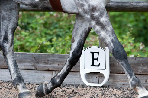 Dressage marker viewed through a horse's legs