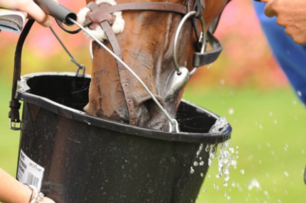Dehydration In Horses Can Be Deadly Here S What You Need