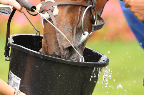 Horse drinking water from bucket.