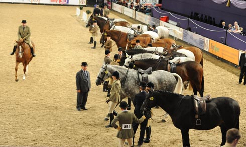 Showing at HOYS