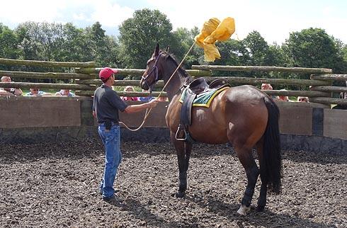 Jason Webb desensitising a horse that bolts