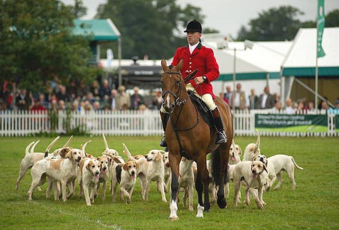 New Forest Hounds at the New Forest Show 2013