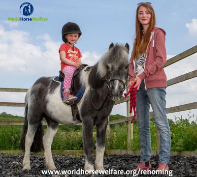 World Horse Welfare pony