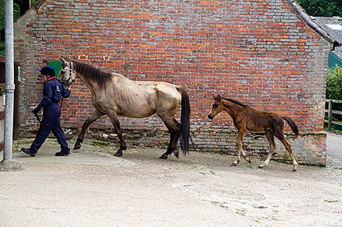 A mare and foal rescued by World Horse Welfare