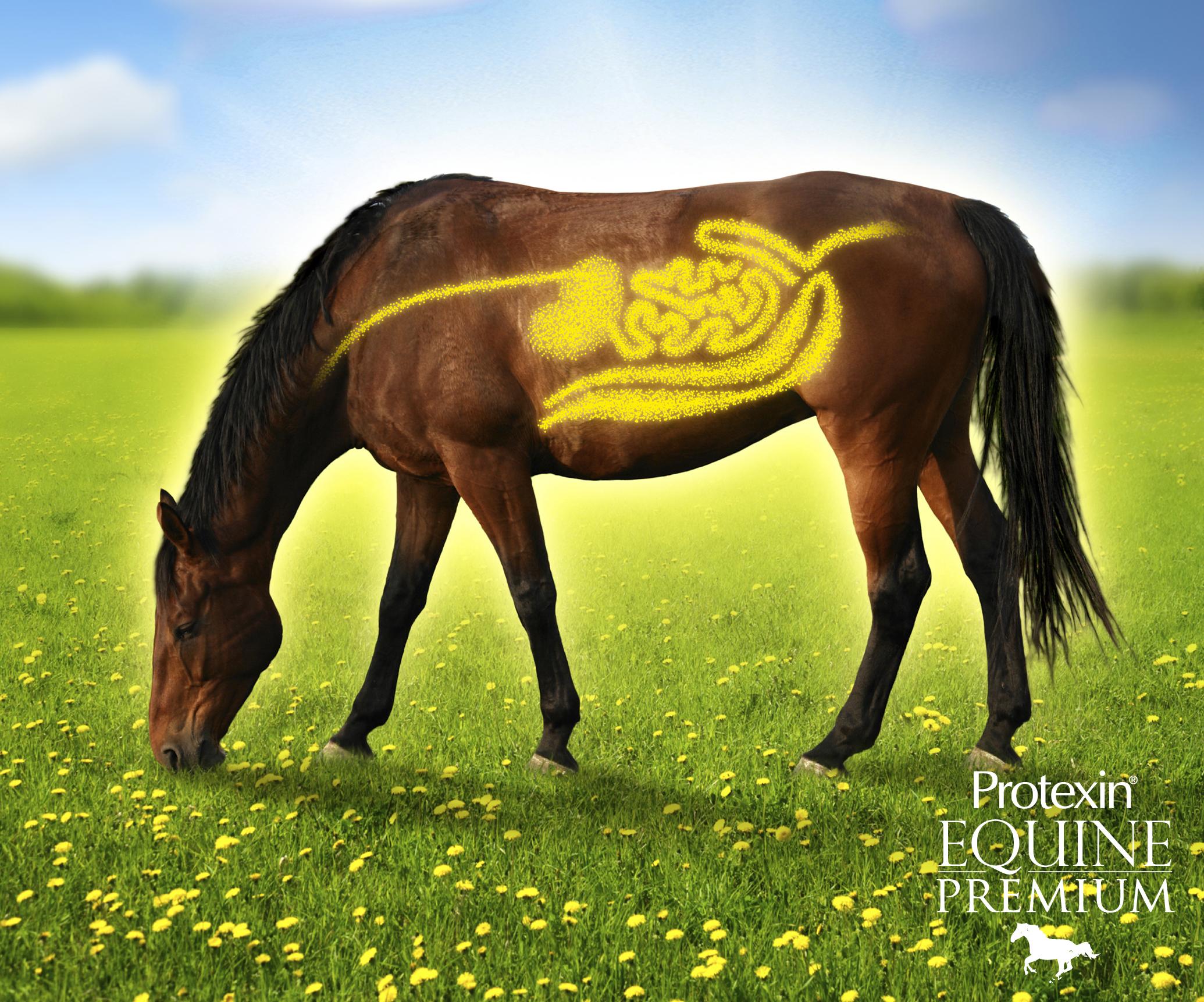 Logo for Protexin Equine Premium