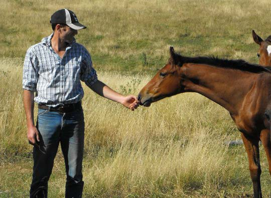 Jason Webb with his father's homebred horses in Australia