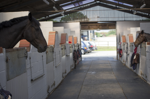 competition stabling app