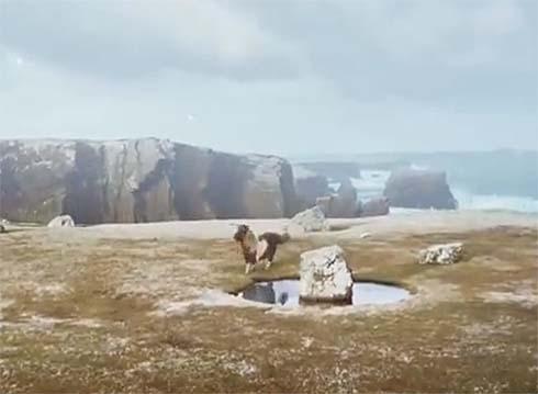 Socks the Shetland pony