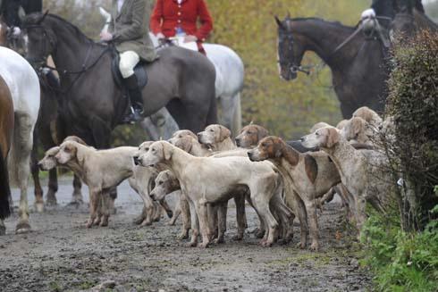 VWH hounds