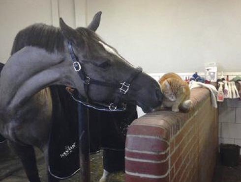 Valegro at home with yard cat Clyde