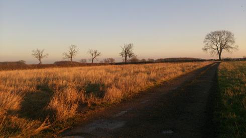 Lauren Shannon's field — soon to be yard
