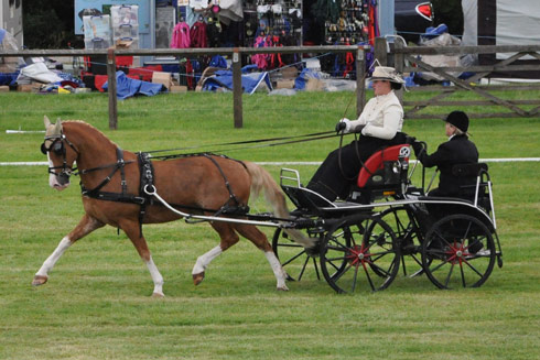 Emily Ham and Alfie at the national carriagedriving championships at Lowther in 2013