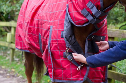A horse wearing a turnout rug