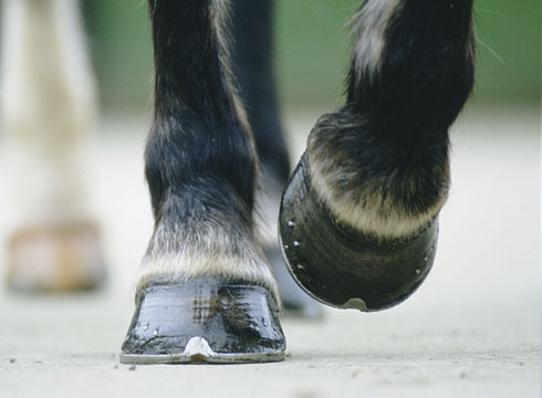 Foot shape and lameness [H&H VIP] - Horse & Hound