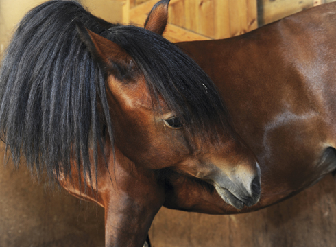 colic in horses: how to prevent it
